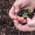 healthy-4-150x150 EMERGENCE OF LIVING PLANTS