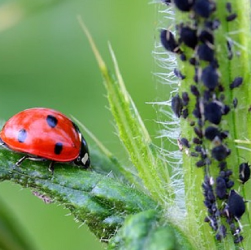 ladybug-1486479__340-1 Home