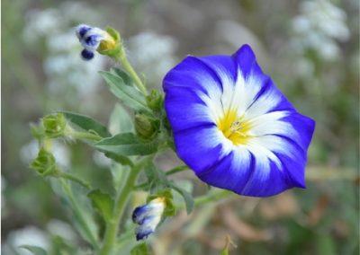 petunia-400x284 Your OctSOWber Garden!