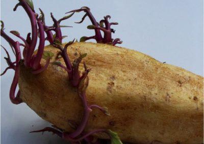 potatoes-400x284 Your OctSOWber Garden!