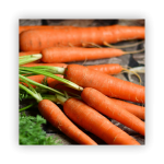 carrots-1-150x150 What to do in your garden in November!
