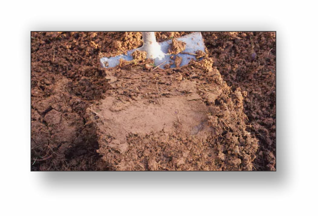 clay-soil Improving Your Soil For Healthier Plants