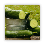 cucumbers-1-150x150 What to do in your garden in November!