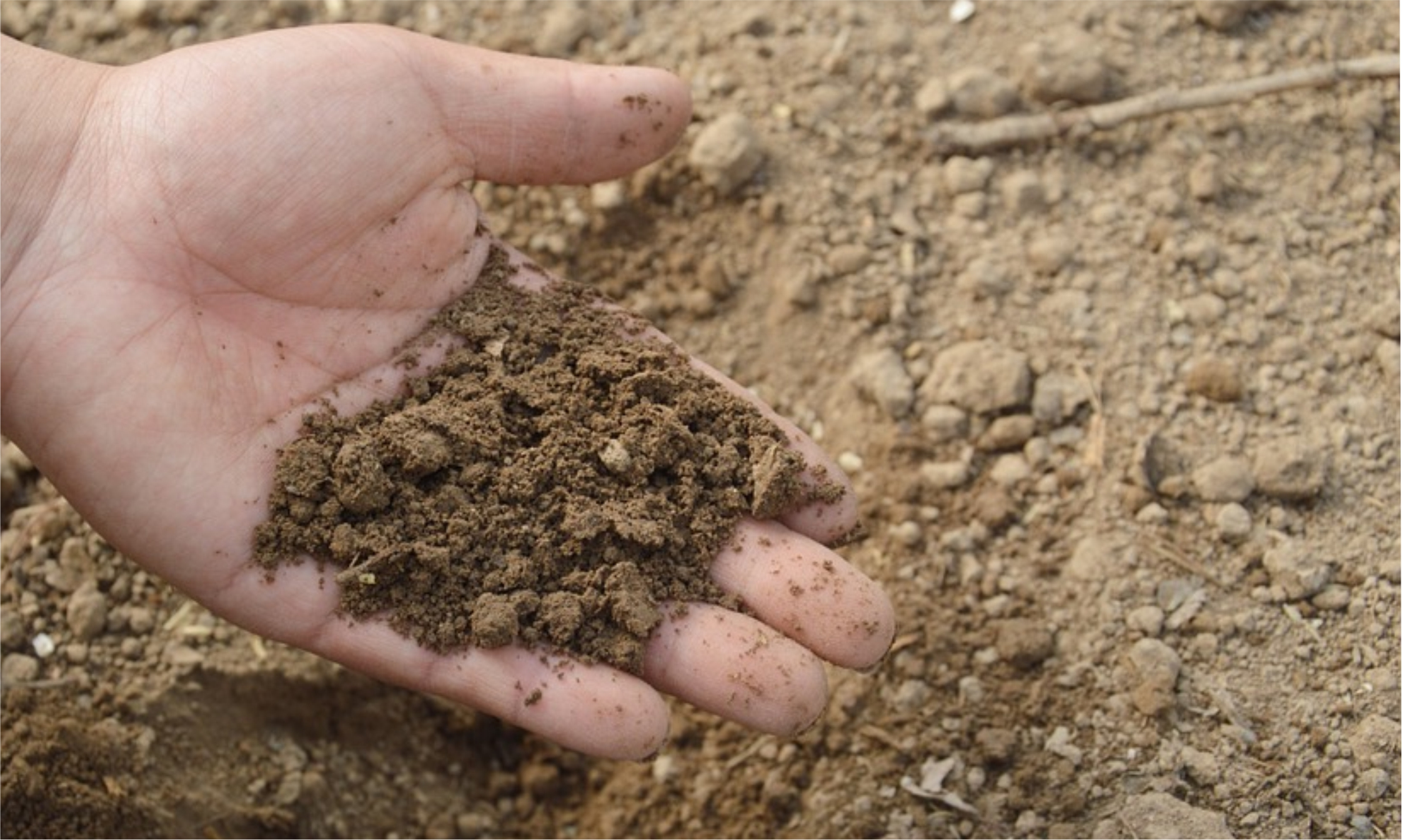 Improving Your Soil For Healthier Plants