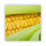 sweet-corn-150x150 What to do in your garden in November!