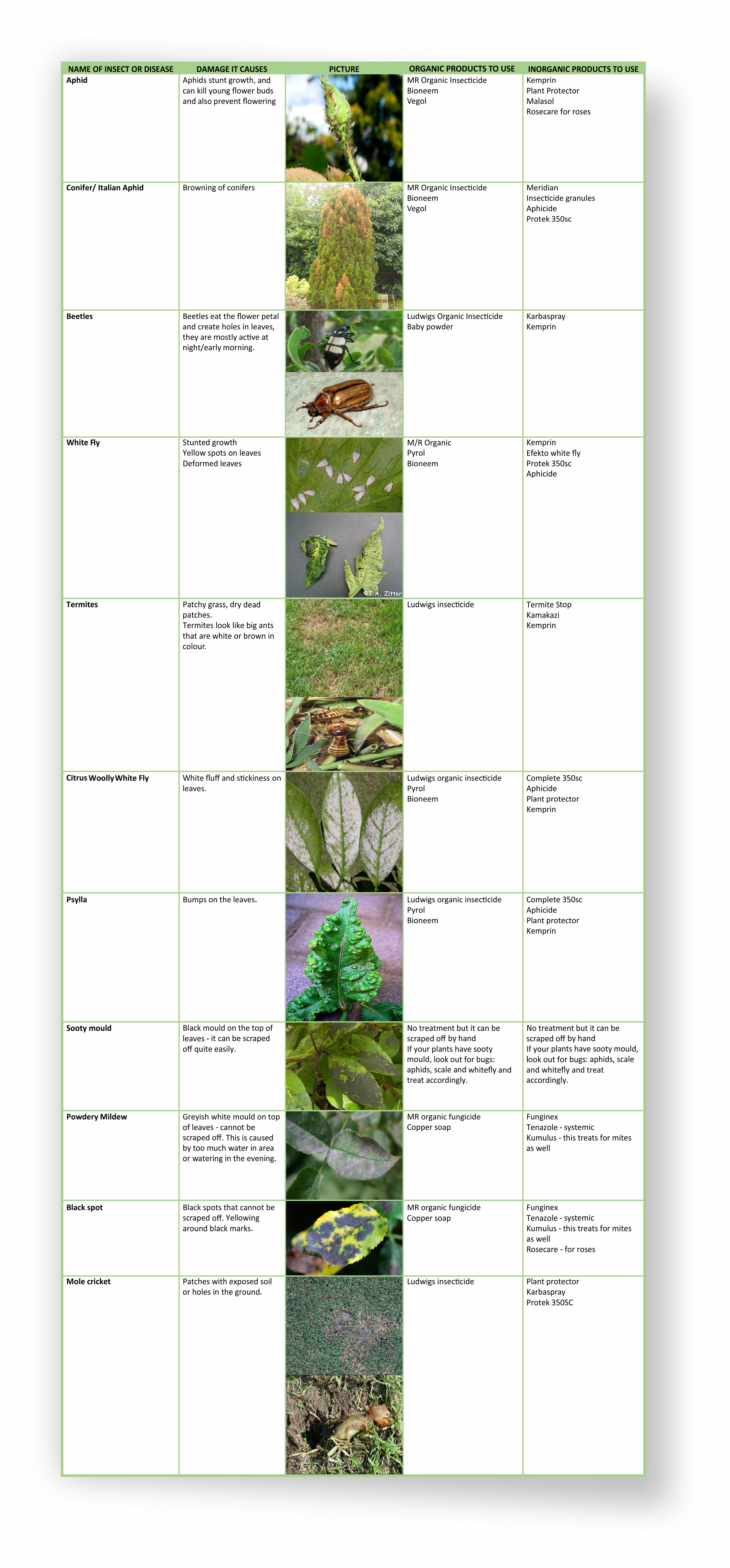 Garden Insects and Diseases