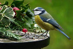 Bird life in the garden
