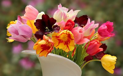 nature-3434165-400x250 Garden Guru Tips and Tricks