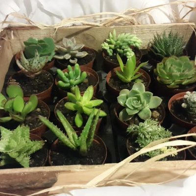 16-variety-with-box-frame-400x400 CACTUS & SUCCULENTS