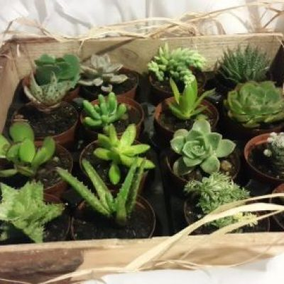 16-variety-with-box-frame-e1547626109131-400x400 CACTUS & SUCCULENTS