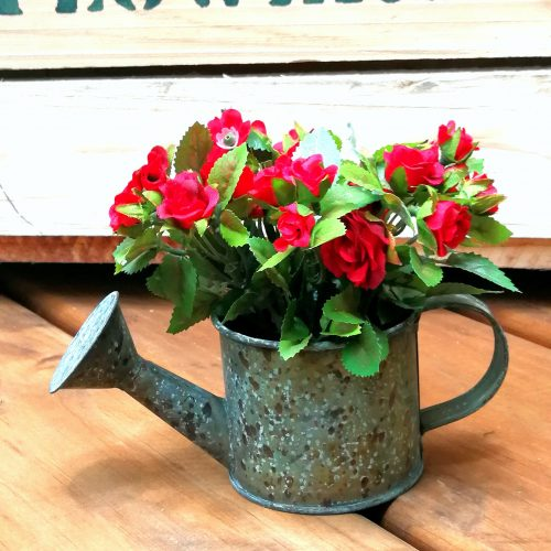 mini rose in watering can