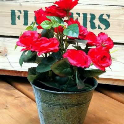 Mini Silk Roses in Pot plant