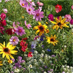 Colour Pots Perennial 17cm