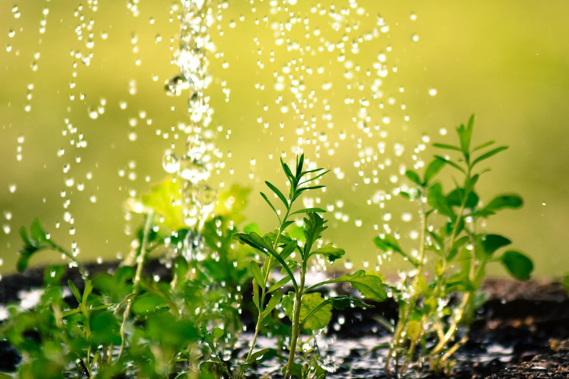 Gardening for Rainy Days
