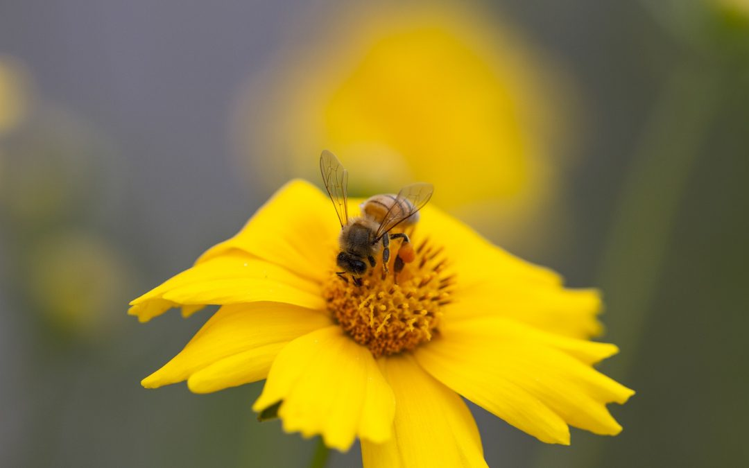 Bee Friendly Gardening