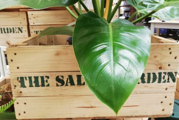 Salad/herb box