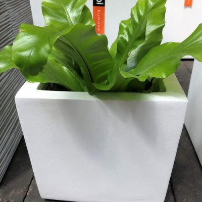 Hadeco Planter Square White Small