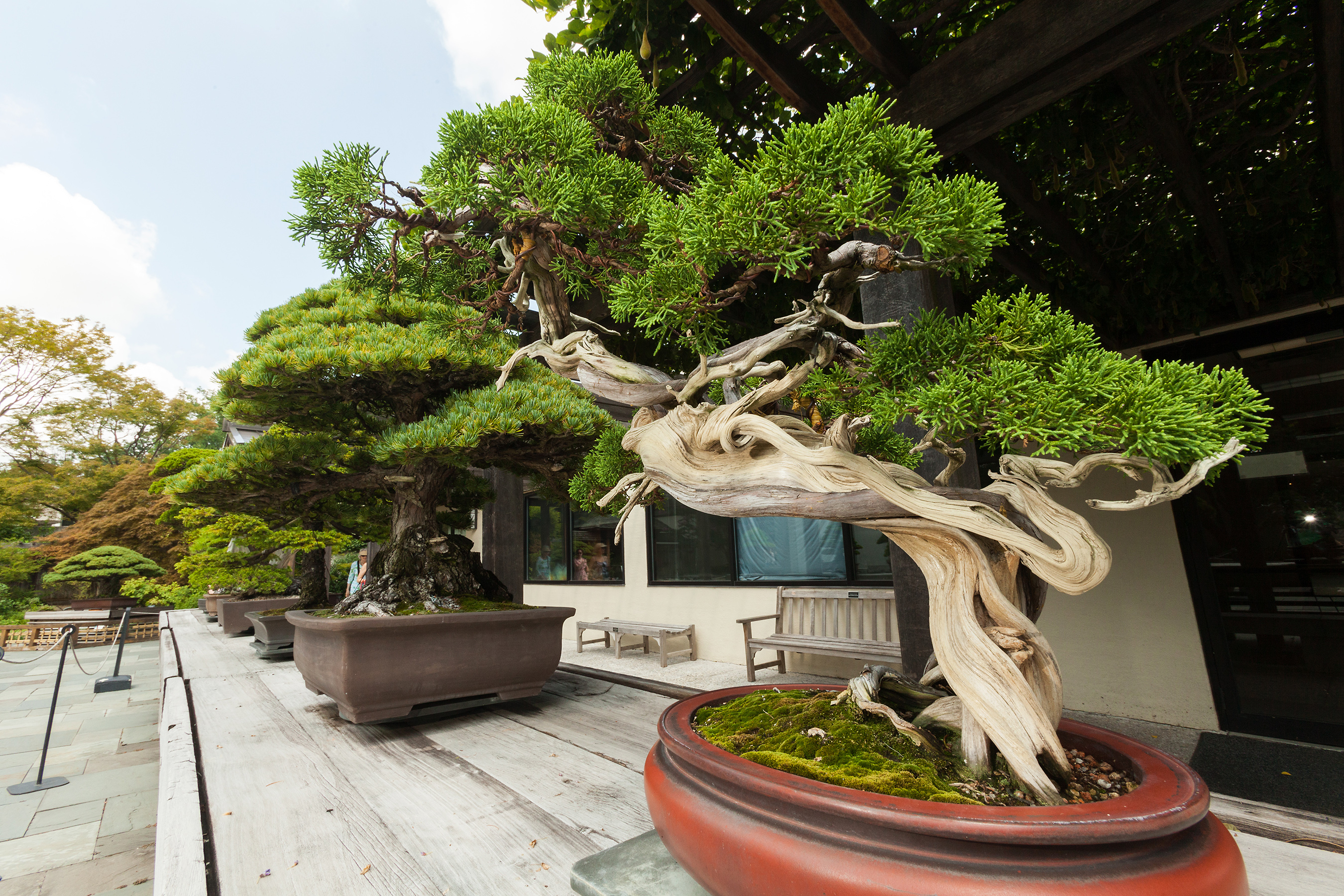 bonsai-tree-big Bonsai Show @ Broadacres EXTENDED!