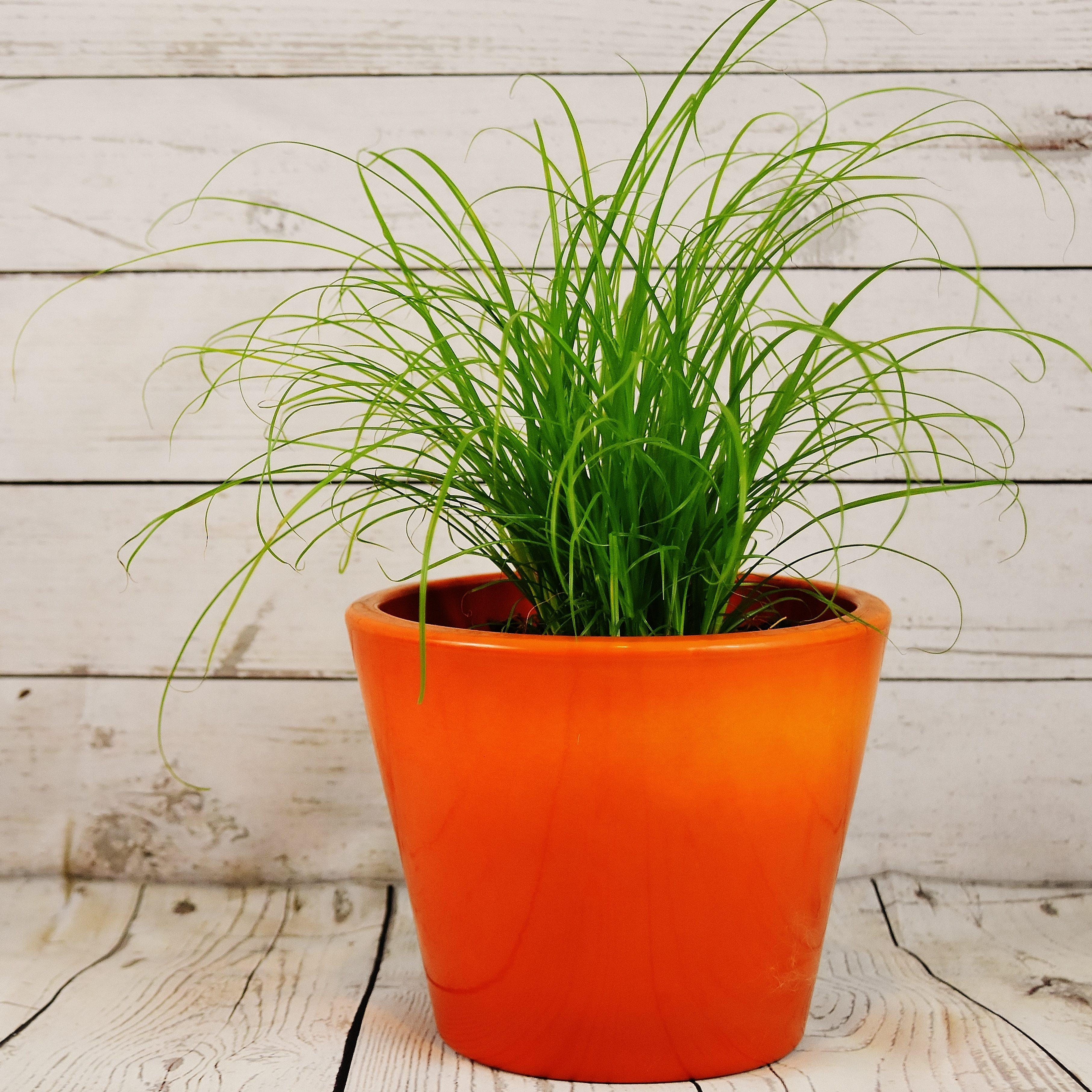 flowerpot-2031666-e1554975487204 Home