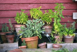 herb-garden-2294487-300x202 HERB COURSE @ PARKTOWN NORTH