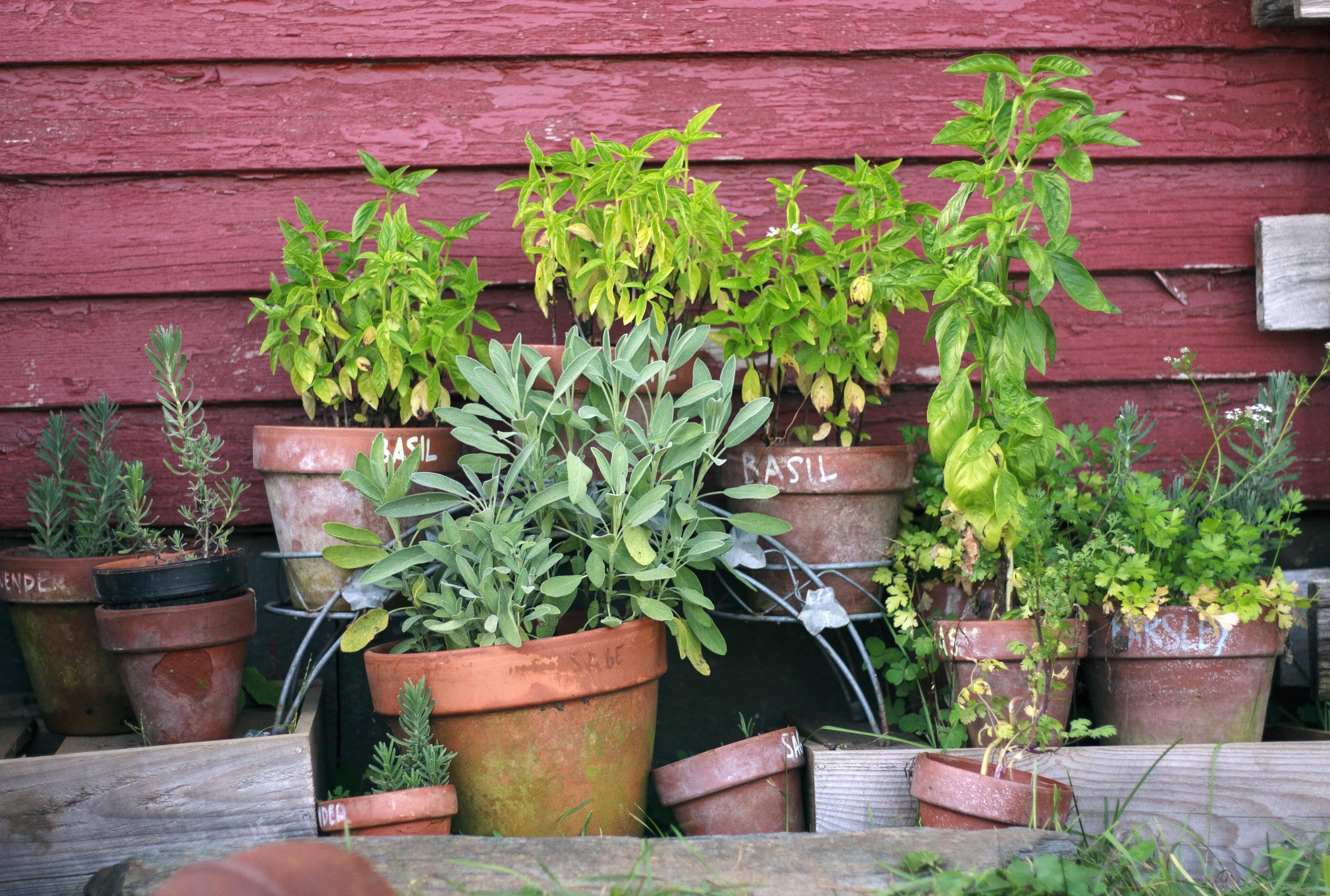 herb-garden-2294487 HERB COURSE @ PARKTOWN NORTH