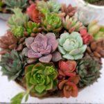 succulent-plants-2045388_1920-150x150 SUCCULENT SHOW AT MENLO PARK