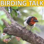 Lead-1-150x150 Birding Talk @ Broadacres