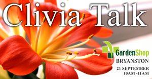 Clivia Talk