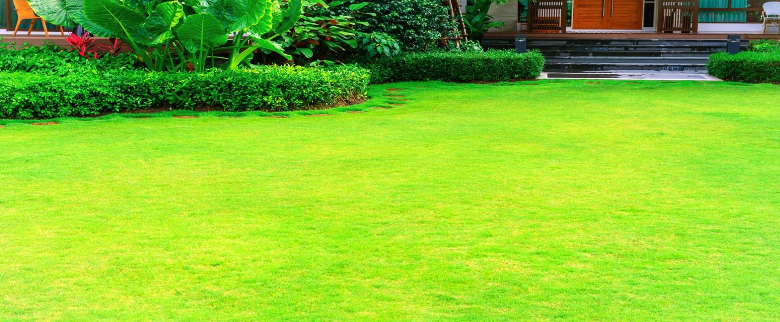 Lawn Care Turfgr Garden