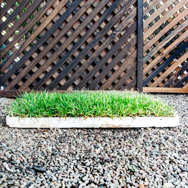 70033763 - Berea grass foliage 30 pack (2)