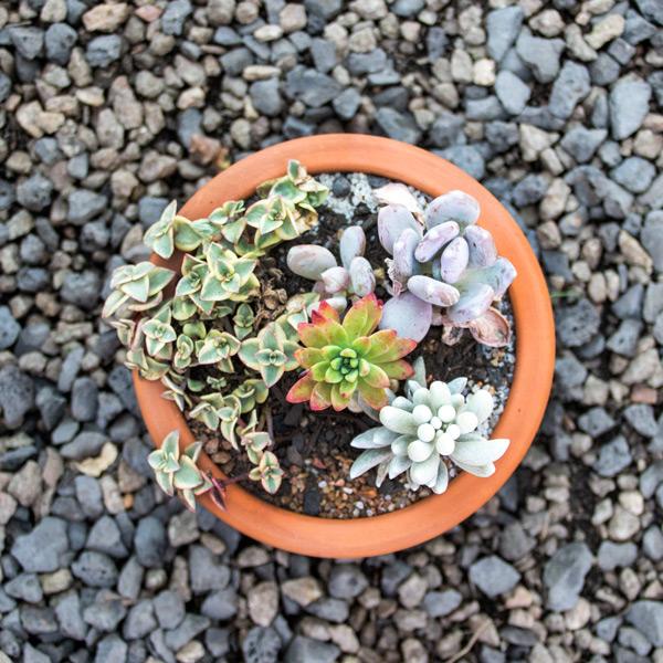 Succulent Bell4