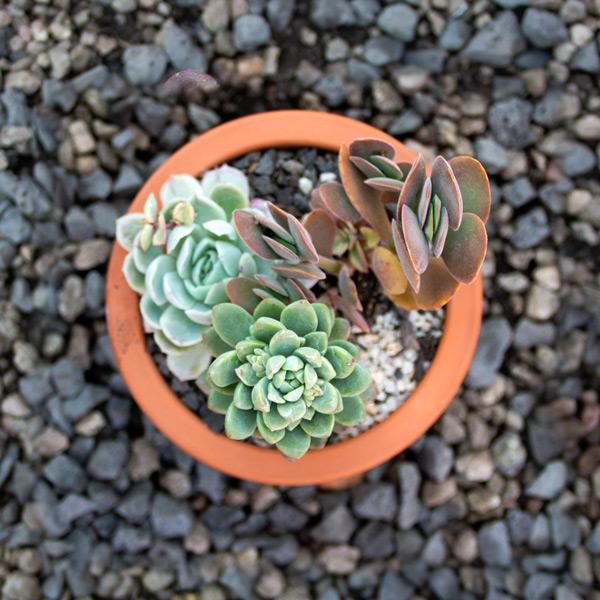 Succulent Bell 4