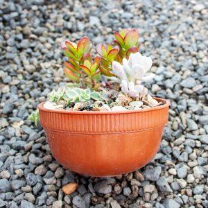 Succulent Bowl 16cm pot