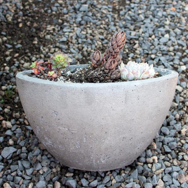 Succulent Bowl Hal moon 3