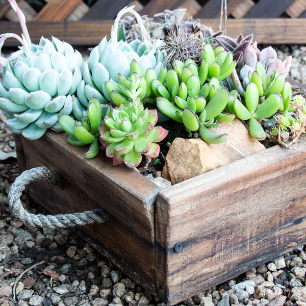 Succulent Wooden Box4