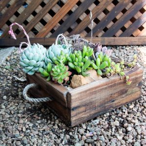 Succulent Wooden Box
