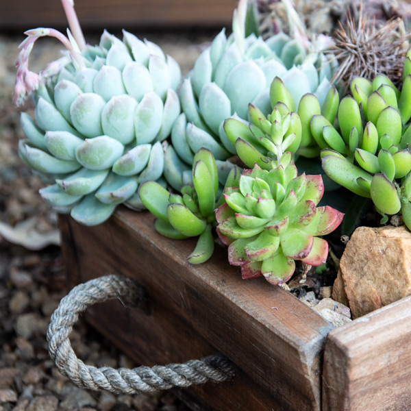 Succulent Wooden Box2