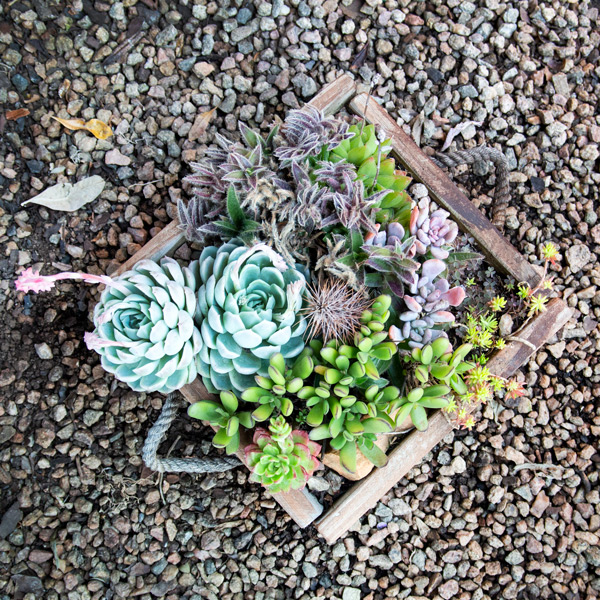 Succulent Wooden Box3