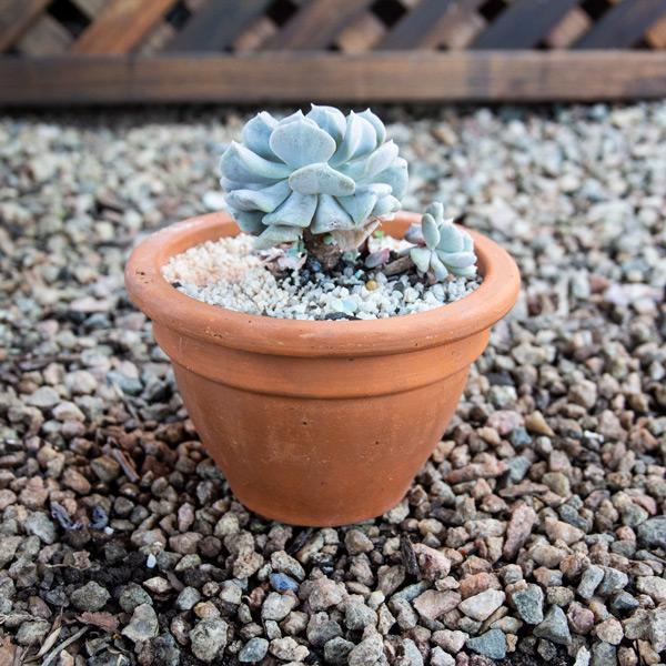 70045178 - Succulent Bowl