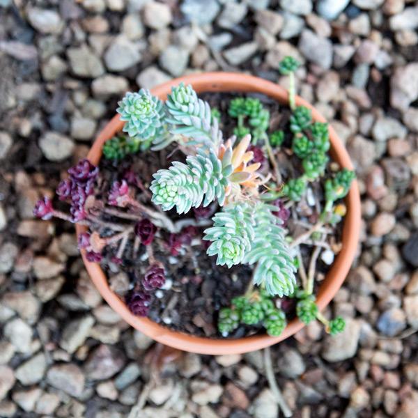 Succulent Bowl 3