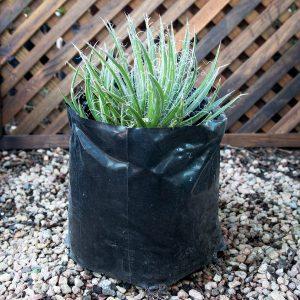 Agave variety 10L bag