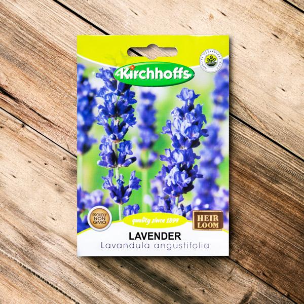 70063045 - Kirchhoffs - Lavender Lavandula angustifolia