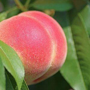 Peach De Wet 20L