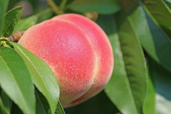 70054600 - Peach De Wet 20L