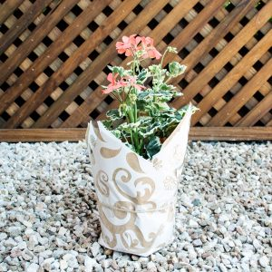 Gift Pelargonium Wrap