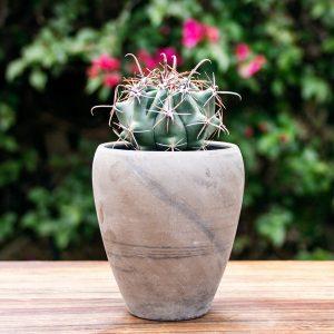 Gift  Cactus Pot