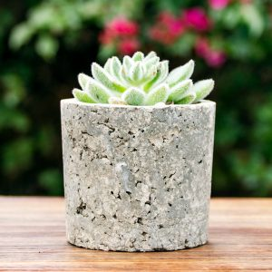 Gift Succulent Mix Tiny Pot