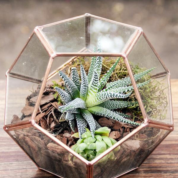 70060757 - Gift Terrarium (2)
