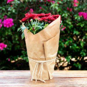 Gift Wrap Chrysanthemum