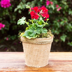 Gift In Hessian Pot Cover